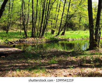 River in the forest, Korytnica, Poland