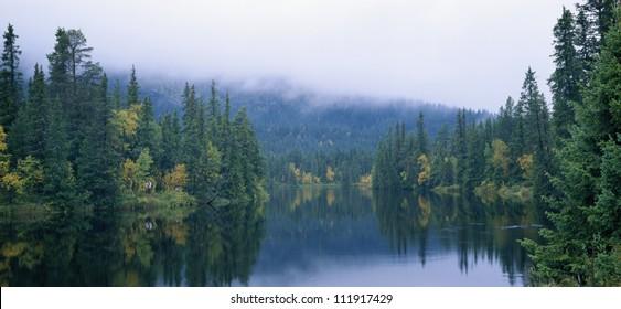 River in forest landscape