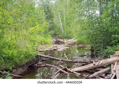 River in forest with log clutters