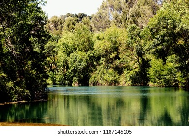 A river in a forest on a sunny day