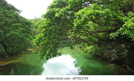 River in the forest in the Philippines