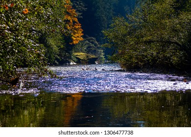 River in the forest surrounded by trees.