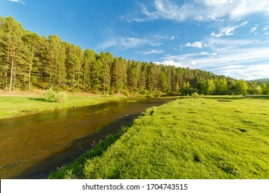 River in the forest, warm sunny day.