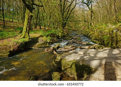 The River Fowey flowing though Draynes Wood in Spring at Golitha Falls National Nature Reserve, Cornwall, England, UK
