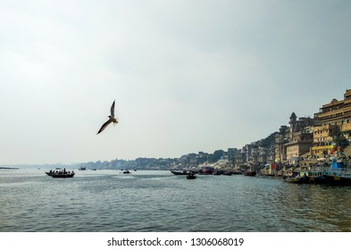 River Ganges, Varanasi, Uttar Pradesh, India; 30-Jan-2019; a Siberian migratory bird flying over the Ganges with the riverfront in the background