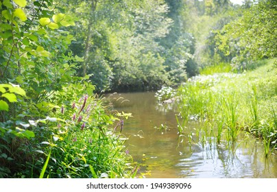 River in a green summer forest. Germany. Natural habitat for American spiny-cheek high crayfish Orconectes Limosus. Nature, wildlife, zoology, biology, ecosystems, environmental conservation