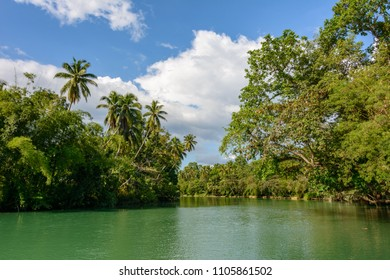 River in the jungle on Bohol island, Philippines