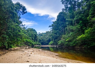 River in Jungle rainforest. Taman Negara national park, Malaysia
