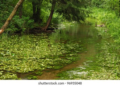 River Kamionka in the Wigry National Park. Suwalsczyzna. Poland
