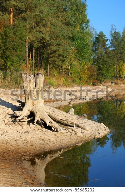 River landscape in autumn forest, early morning on a sunny day