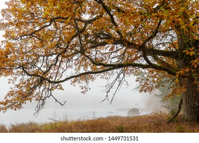 River landscape in a foggy morning