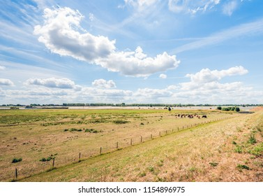 River landscape as seen from the top of a dyke with dry and yellowed grass after a prolonged drought period. In the background horses and cows are grazing. It is a sunny day in the summer season now.