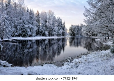 River landscape and spruce tree forest covered by fresh snow during Winter Christmas time,