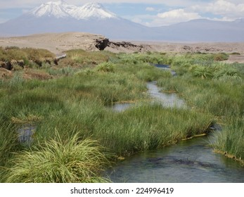The river make a green line through the  Atacama Desert