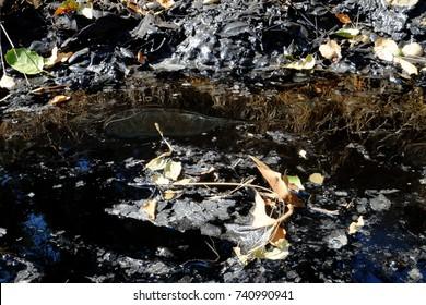 River of natural tar