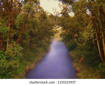 River Opava flowing between tree branches at summer evening. Relaxing nature, lush greenery. Blurred watter surface ,creative post processing.