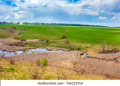 River overgrown with reeds against the background of a green sown meadow. Green spring in Russia.