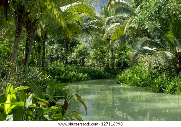 River and palm forest in Thailand 02