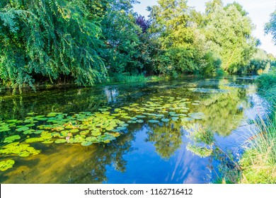 river pond landscape with reflecting water and water lilly's