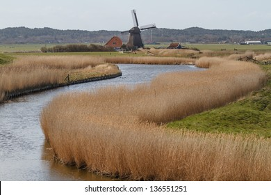 River with reed bed