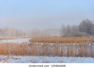 River with reeds on sunny day in winter