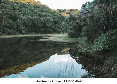 River Reflexion, Florest