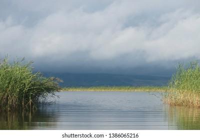 River. Riverside. reeds. Lake. Russia