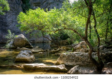 a river and its rocks under the trees