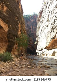 River running through ravine. The Narrows in Zion National Park, Utah.