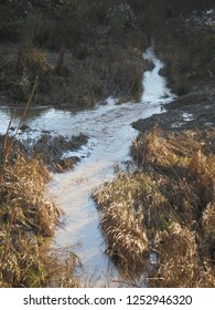 River running through reeds and weeds on a sunny December morning in Andalusia
