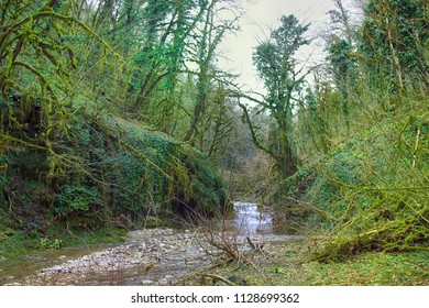 River shallow and subtropical 	mesohylile evergreen forest covered with moss, it saw Odysseus. Colchis. East shore of Black sea