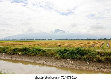 River side Paddy field after havest
