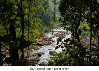 River in Sinharaja forest national park - Sri Lanka
