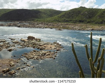 River with stones in the bed, with mountains in the background and cacti on the banks
