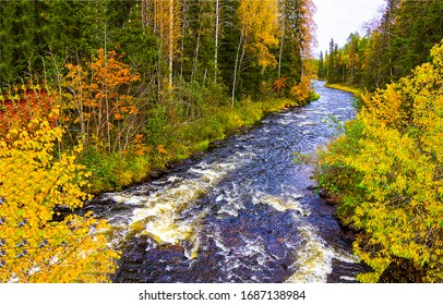 River stream in autumn forest landscape