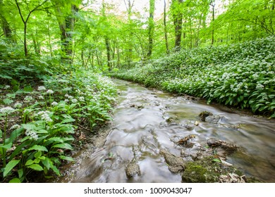 river stream in the forest