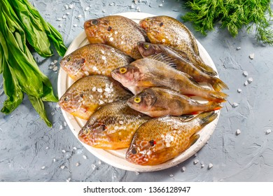 River sunny bass. Perch on a wooden board with greens. Background concrete.   Fish Sunny Perch.