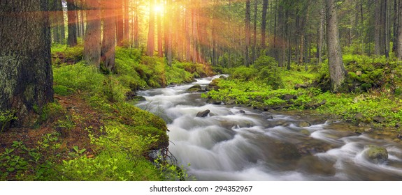 River at sunrise in the Carpathian forest - fast jet of water at slow shutter speeds give a beautiful fairy-tale effect. Ukraine is rich in water resources in the Carpathian Mountains is  good ecology