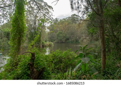 River surrounded by green trees in Australia