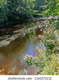 The River Tavy running through Tavistock