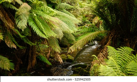 River in a temperate rainforest at the Great Ocean Road, Victoria in Australia