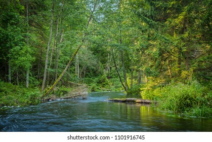 river in the thick forest