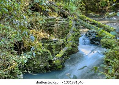 River through a forest in Waitomo, Waikato