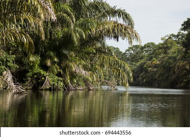 River at Tortuguero National Park, Costa Rica.