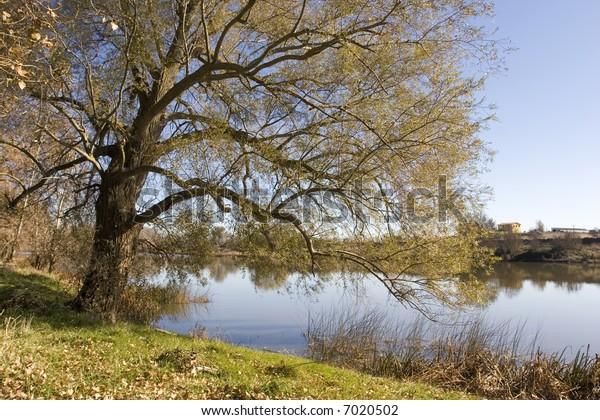 River tree in autumn