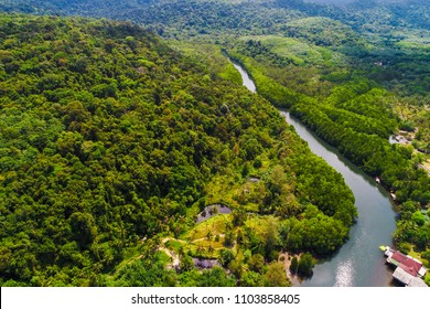 River in tropical mangrove green tree forest aerial view