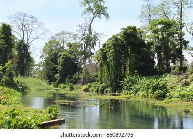 river in the tropics