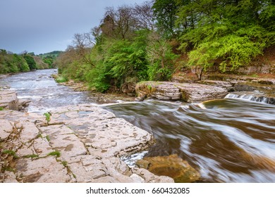 River Ure Flows over Aysgarth Lower Falls / Aysgarth Falls consist of three main falls, lower, middle and upper falls. They are spread over a mile of the River Ure in Wensleydale