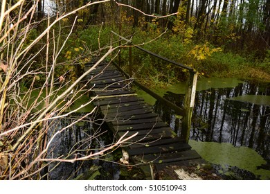 The river view in a dark autumn forest