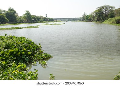 River views of the tha jean river (tha jean river) with water Hyacinth.